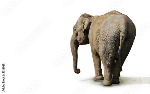 Photo sur Aluminium Elephant éléphant
