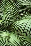 Roślina tropikalna. - 8326841