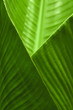 canvas print picture Banana Leaf Cup