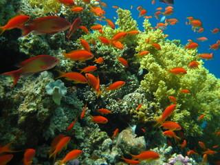 Fototapeta Rafa koralowa Korallenriff