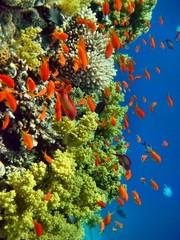 Obraz na Szkle Korallenriff rotes Meer