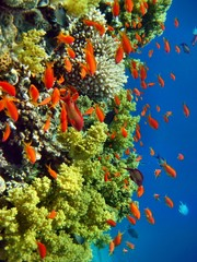Panel SzklanyKorallenriff rotes Meer