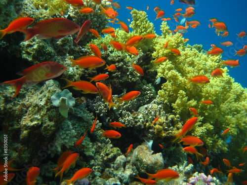 Korallenriff - 8350051