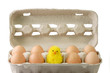 canvas print picture - Eier mit Kueken
