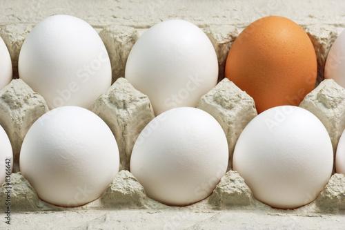 Leinwanddruck Bild - H. Brauer : Braunes Ei