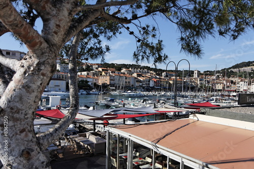 Platane dans le port de plaisance de Cassis - France Canvas Print