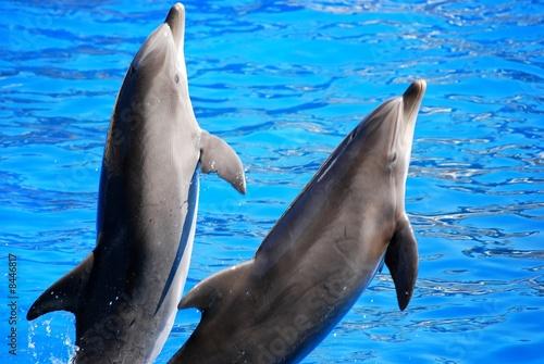 Foto op Plexiglas Dolfijnen dauphins qui sautent 2