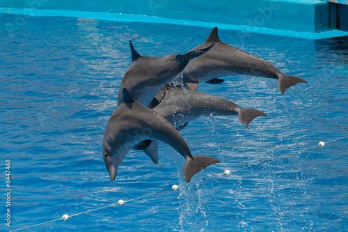 Foto op Plexiglas Dolfijnen Dolphins