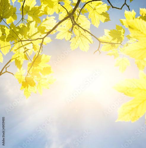 Foto-Kissen - Golden leaves at sunny day (von Nejron Photo)