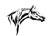 horse head illustration 2