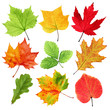 Colorful leaves isolated on white