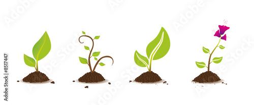 plante set