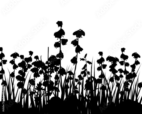 Staande foto Bloemen zwart wit meadow grass