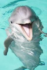 Panel Szklany Delfin bottlenose dolphin