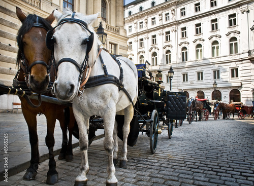 Fotografie, Obraz  Horse-driven carriage at Hofburg palace, Vienna