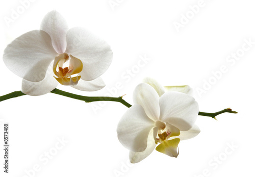 Photo Stands Orchid Weisse Orchidee Zweig