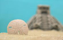 Sand Dollar And Pyramid On Beach