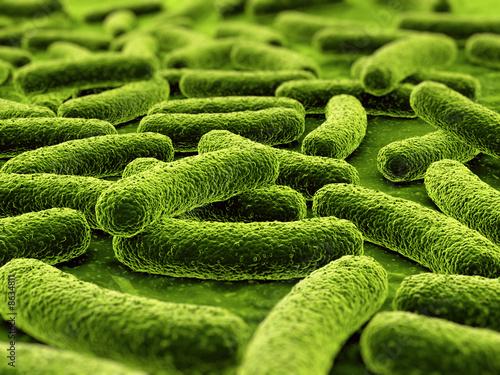 Fotografía  Bacteria