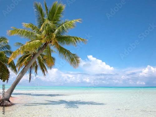Bahamas cocotier sur plage Iles Turkoises Wallpaper Mural
