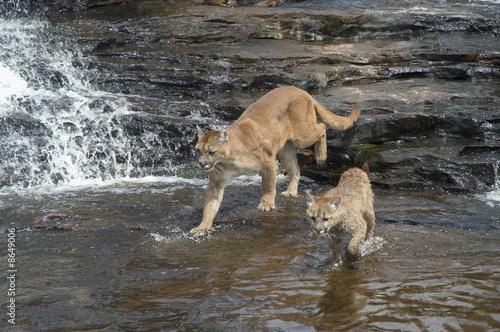 Cadres-photo bureau Puma Cougars