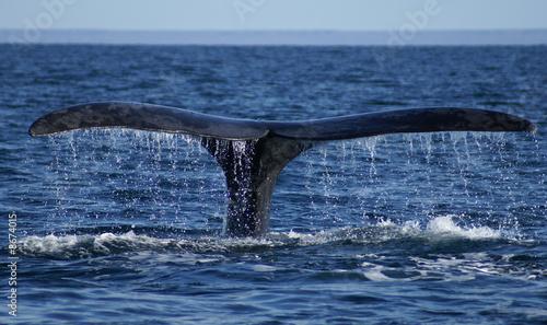 Foto-Flächenvorhang ohne Schienensystem - whale tail (von JOETEX1)