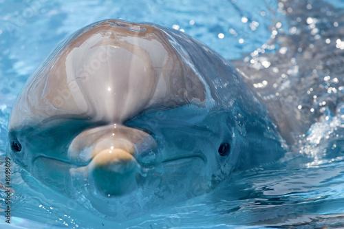 Foto dolphin