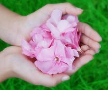 Fleurs Rose Romantique