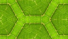 Underside Of Green Leaf Seamless Tile Background 5