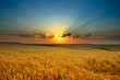 canvas print picture Golden field