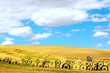 canvas print picture - Old Countryside Landscape