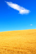 canvas print picture - Wheat fields and Bright Skies