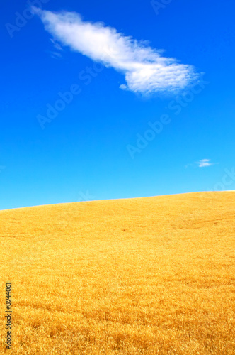 canvas print motiv - JEANNE : Wheat fields and Bright Skies