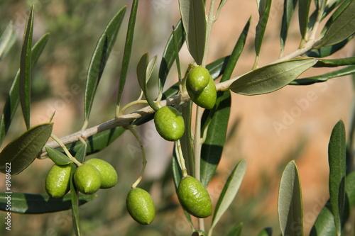 Fotomural  Olives
