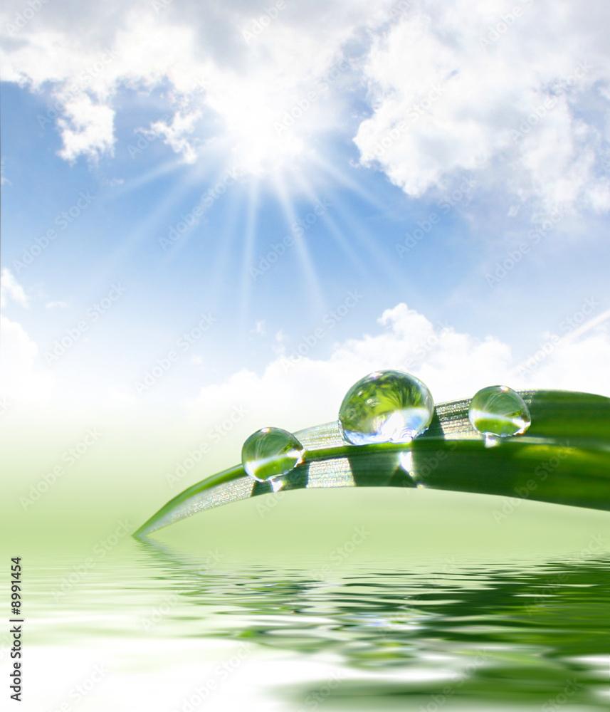 Doppelrollo mit Motiv - fresh green grass