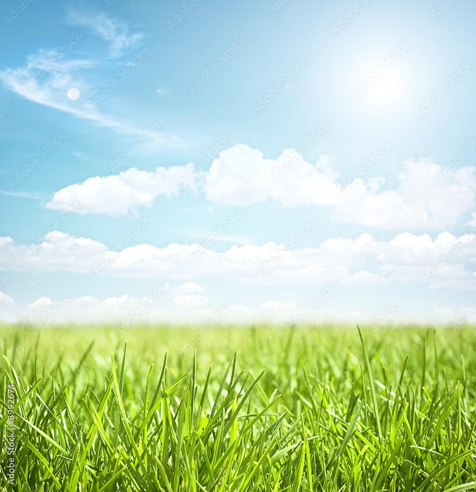 Fototapety, obrazy: sky and grass