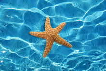 Water And Starfish