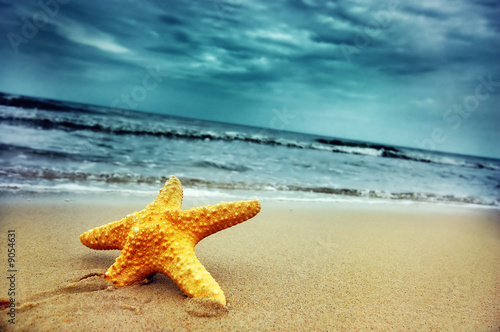Tuinposter Strand Starfish on the tropical beach