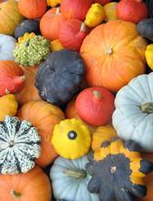 Colorful Squash Collection (Au...