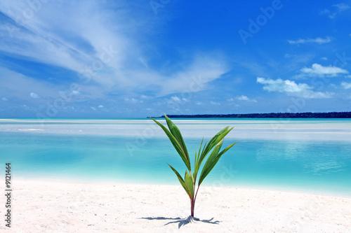 Fotografie, Obraz  Aitutaki lagoon, Cook Islands