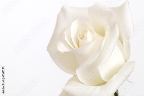 Fotografie, Obraz  weisse Blüte