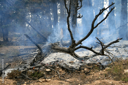 Fototapety, obrazy: forest fire
