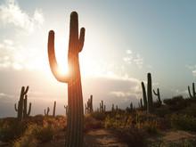 An Illustration Of A Desert Wi...