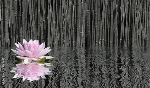 Garden Poster Lotus flower fleur de lotus