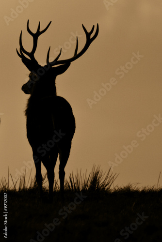 Staande foto Hert Red Deer (Cervus Elaphus) On Guard
