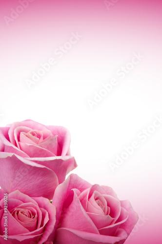 Foto-Duschvorhang - Beautiful pink roses (von BVDC)