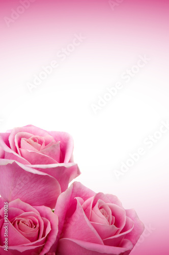 Foto-Kissen - Beautiful pink roses