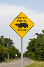 A Road Sign Warning Motorist Of A Gopher Tortoise Crossing