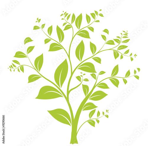 Fototapeta vecteur série - floral design arbre et feuilles vectoriel obraz na płótnie