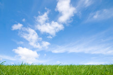 View Of Peaceful Grassland, Blue Sky Above And White Clouds