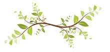 Vecteur Série - Décoration Floral Design